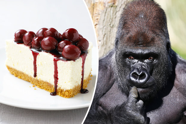Cheesecake and gorilla