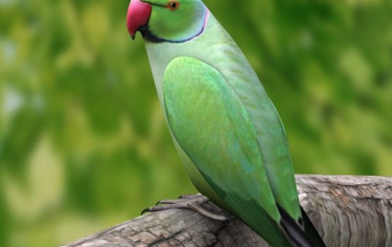 Police Arrest Parrot For Using Foul Language