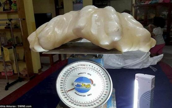 World's Largest Pearl Found Hidden Under Bed After 10 Years
