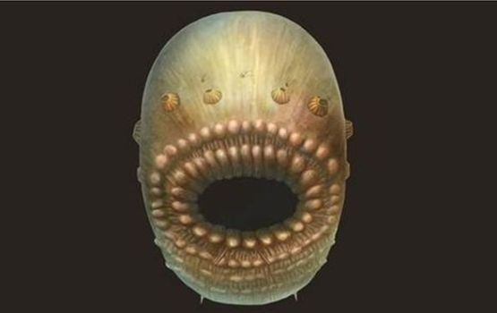 Oldest Human Ancestor Was A Sack With A Big Mouth, Teeth, And No Anus