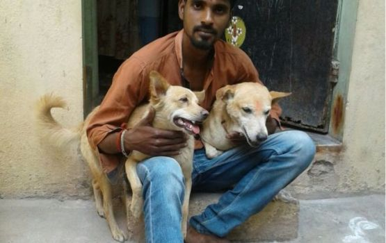 Indian Street Dogs Capture Suspect In Stabbing Attack