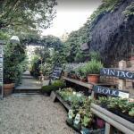 Battersea Flower Station Garden, Wandsworth, England