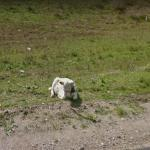 Chillin Cow, Solis de Mataojo, Uruguay