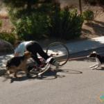 Lady Falls Off Bike, Reno, Nevada, USA
