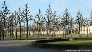 Schwetzingen_Park_SpalierBäume