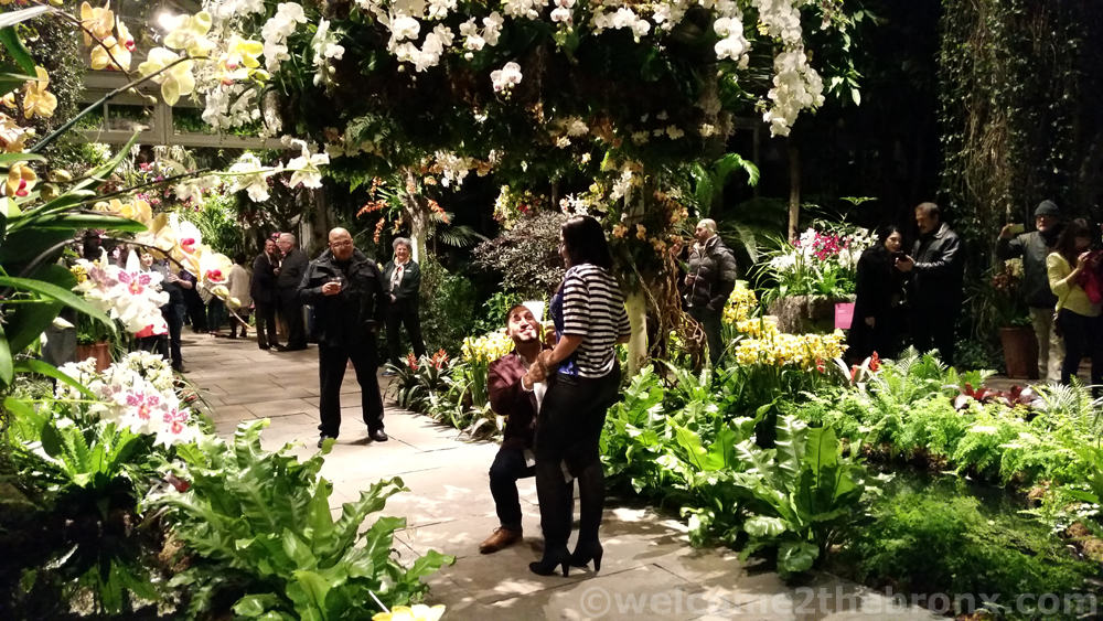 Great There Was Even An Engagement On Saturday For Orchid Evenings!
