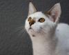 extrabom-promove-feira-de-adocao-e-atividades-para-caes-e-gatos-em-jardim-camburi