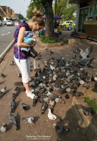 Birds in Bangkok