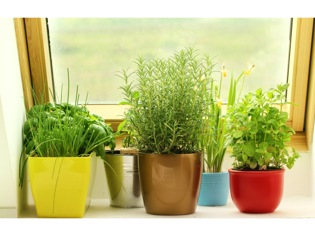 Fresh herb plants in a pot by a window from a kitchen garden