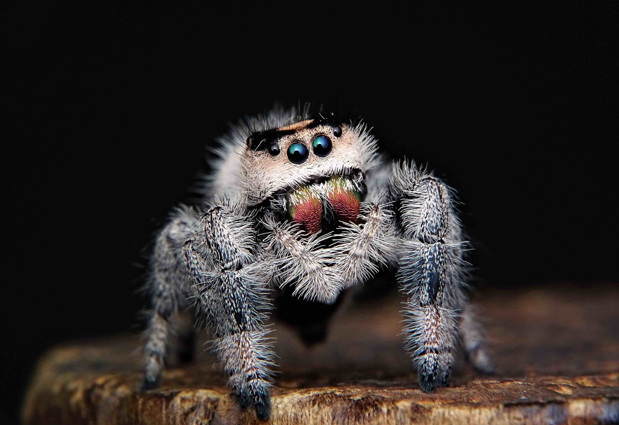 All About Spiders Basics Body Behavior