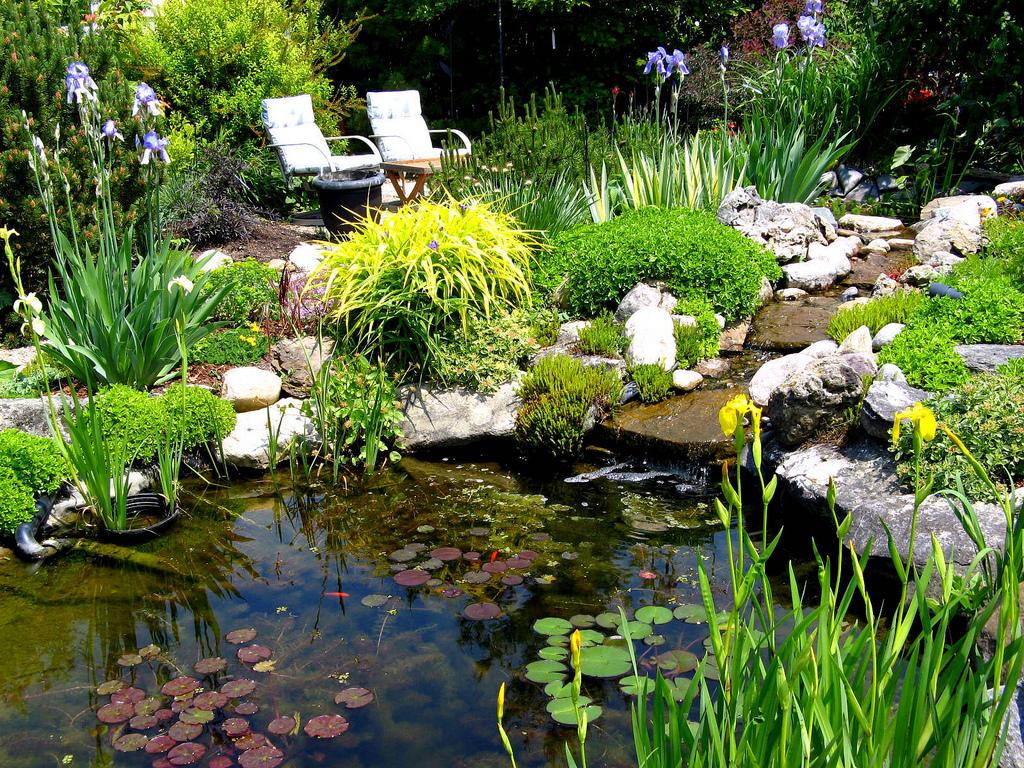 Native plants for a pond | Welcome Wildlife on Pond Ideas Backyard id=27774