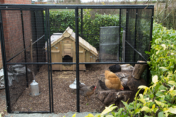 Bird Cage Outdoor Decorating