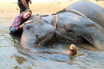 Elephant Training