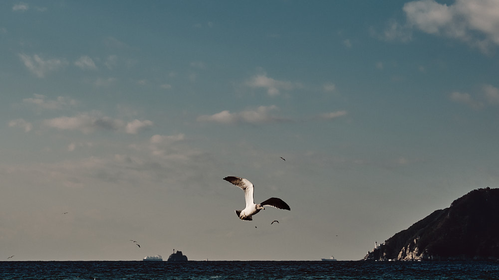 A Seagull Flies Close in Hope of a Snack