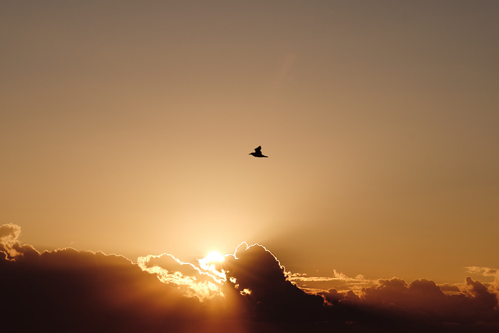 A Seagull at Sunrise - Busan Seagull Path