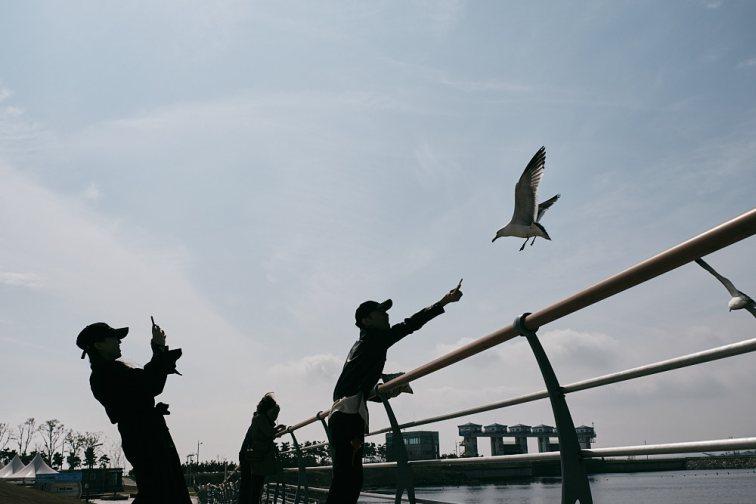 Feeding the seagulls - +852 Magazine