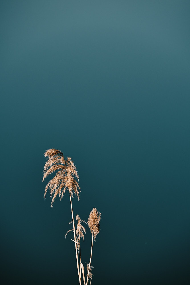 Grass, Pyeongchang