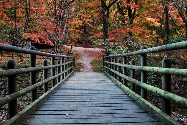Naejangsan Autumn