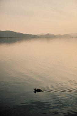 Duck and Sunset - Yansuri Cycling Path