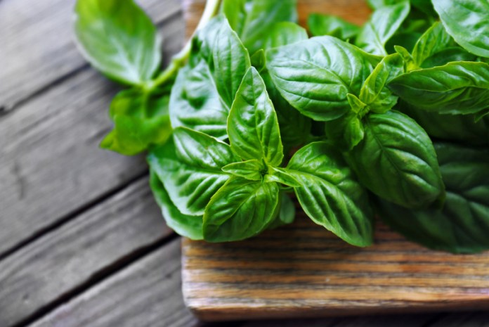 Image result for basil