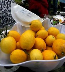 some of (nanlev)'s tasty Meyer lemons