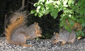 Even the squirrels get something to eat