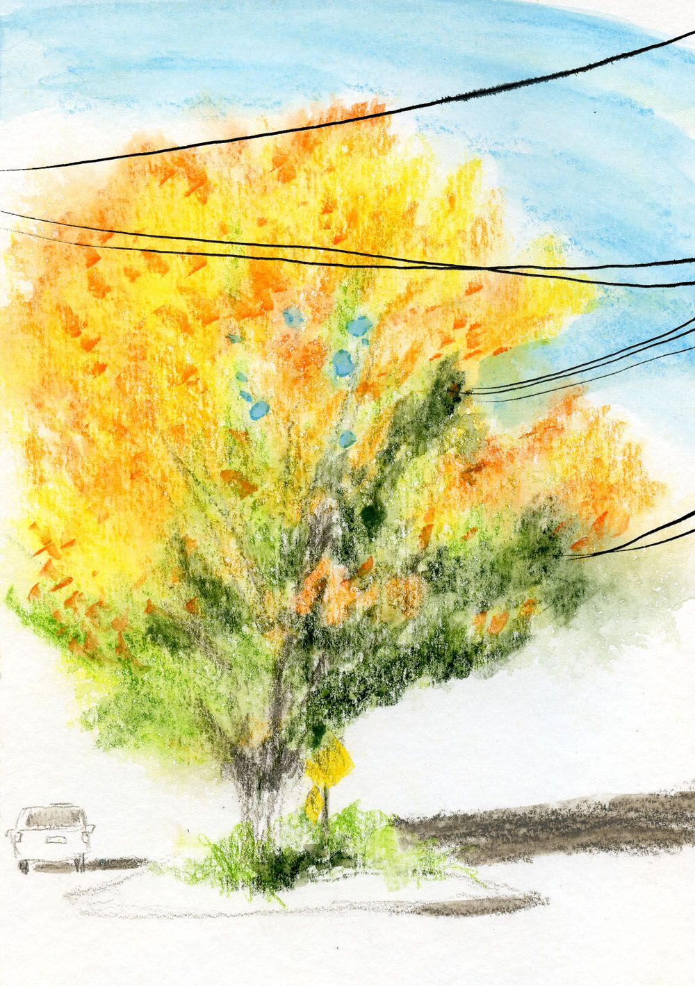 Museum Aquarelle sketch - maple tree