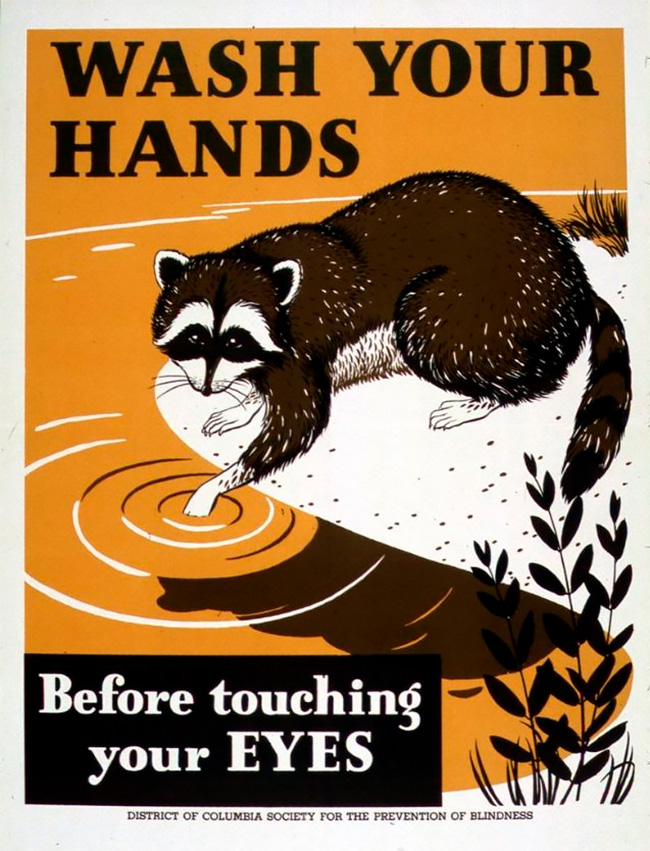 Wash Your Hands Raccoon