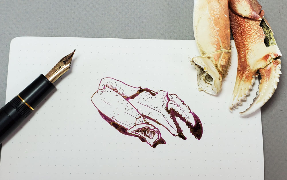 10 - crab claw sketch