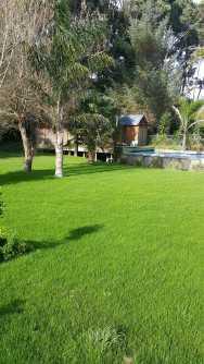 lawn-pool