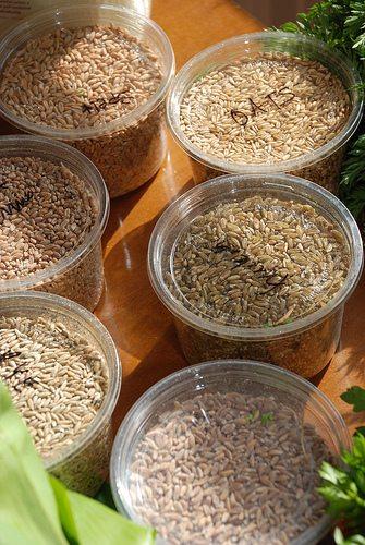 whole grains, balanced diet, food, health
