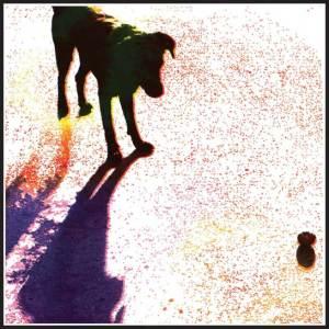 dog-portrait-wellststudio