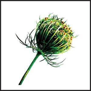 seed-head-promo