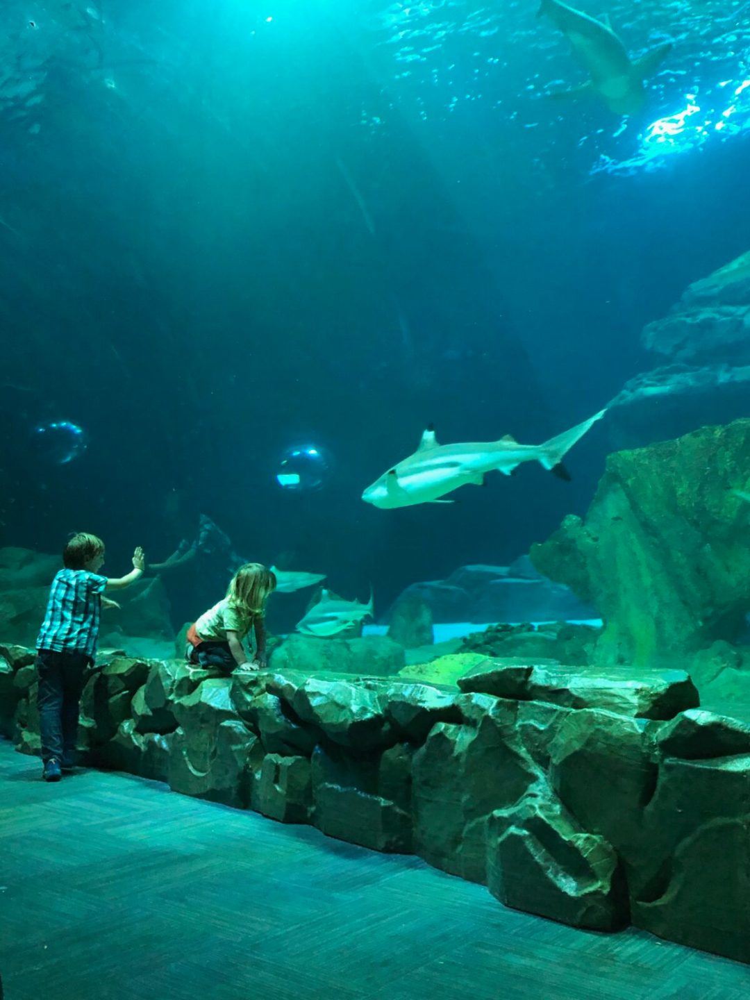 aquarium de paris requins