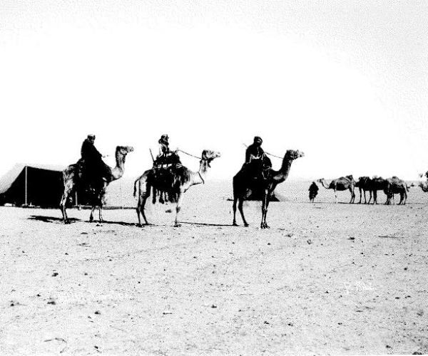 Camels, Egypt, around 1873