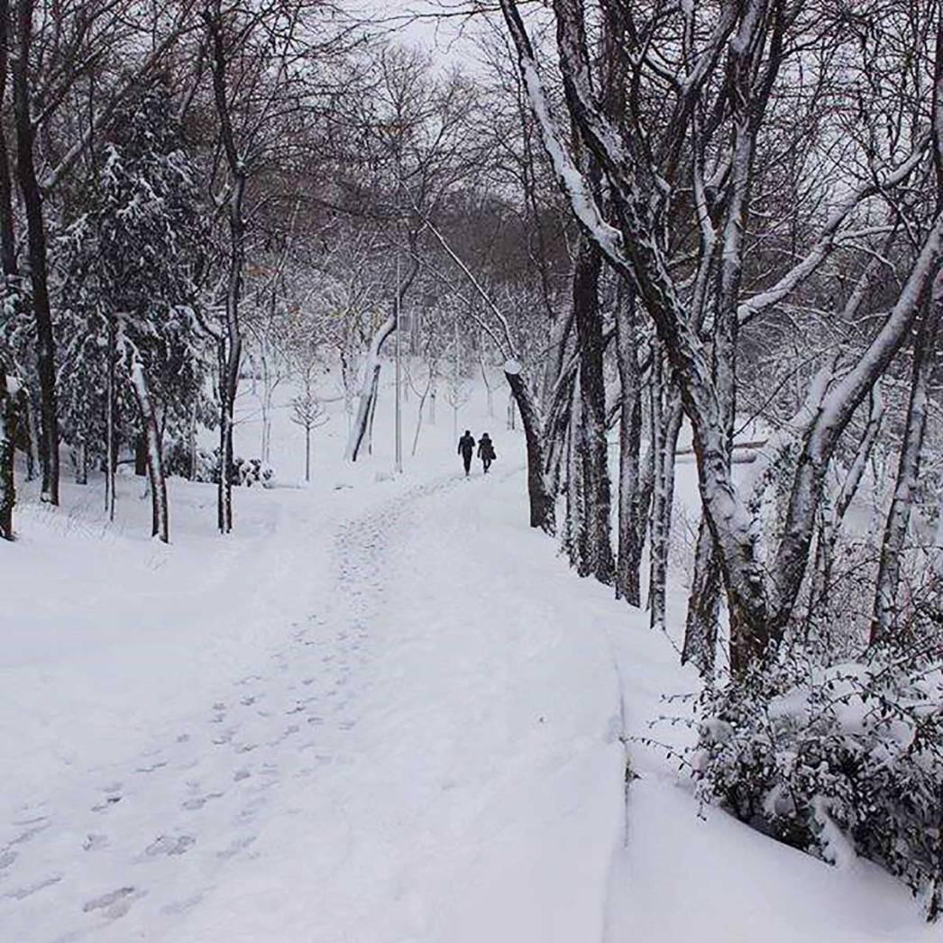 Snow Defoliated Trees Istanbul