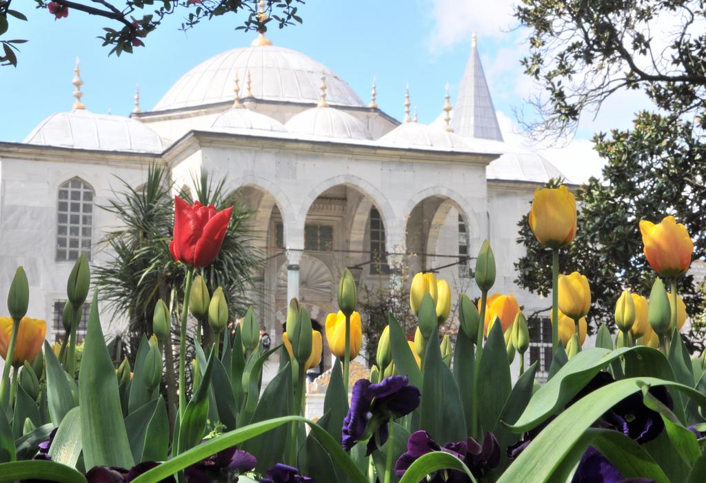 Topkapi Palace Tulips