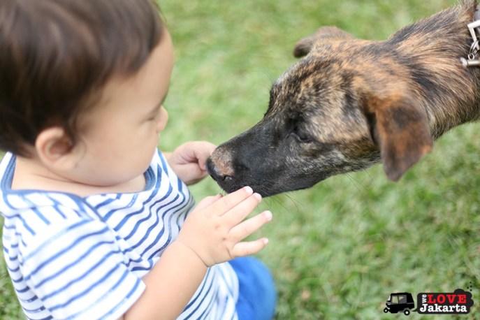 tasha may_welovejakarta_we love jakarta_what to do in Jakarta_Taman Suropati_Menteng_Baby with a dog