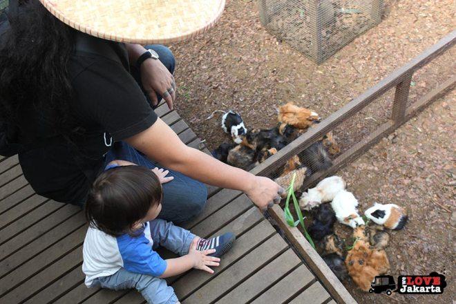 Feeding guinea pigs at Kuntum Bogor_Quantum Nursery Bogor_Kuntum Farmfield Bogor_Tasha May_welovejakarta_we love jakarta_jakarta with kids_kids in indonesia_what to do with kids on the weekend in jakarta
