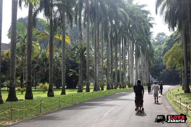 Walking in Bogor Botanical Gardens Indonesia