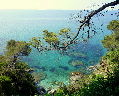 Domaine du Rayol - Jardin de la Méditerranée - Rayol ...