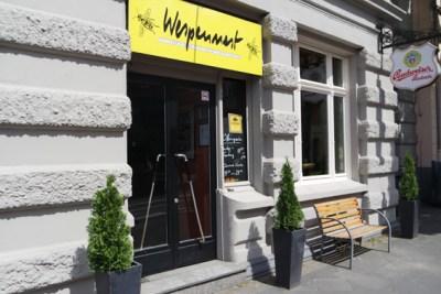Wespennest Bonn
