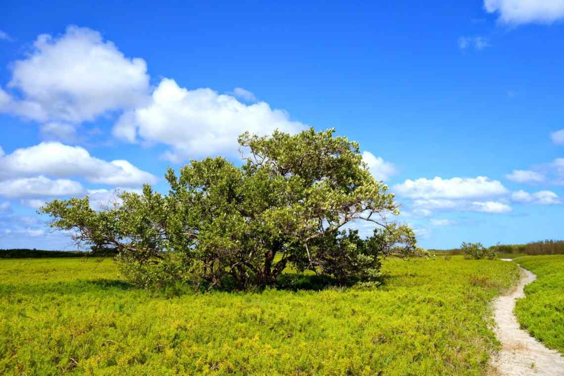Hiking & Camping on the Coastal Prairie Trail in Everglades National Park