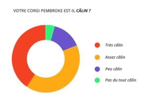 calin_corgi_pembroke
