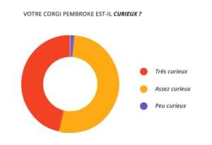 curieux_corgi_pembroke