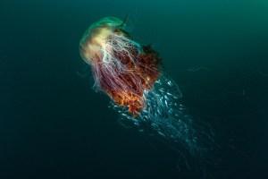 aberystwyth arts centre hosts brist wildlife photo exhibition