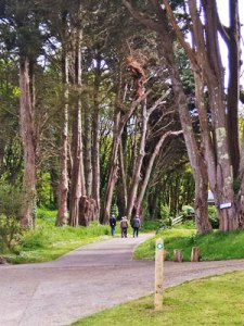 caldey island paths 1