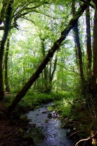 wales amy aed woods