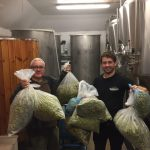 green hop beer going in to the brew