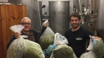 green hop beer being brewed